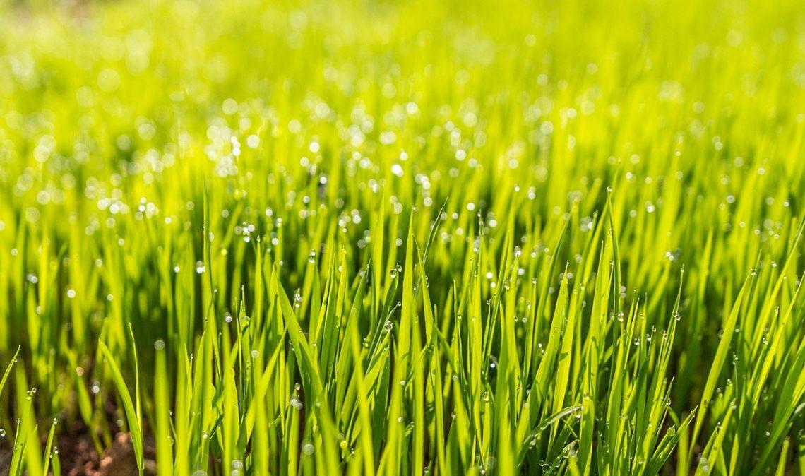 Что делает хорошего поставщика услуг для газонов